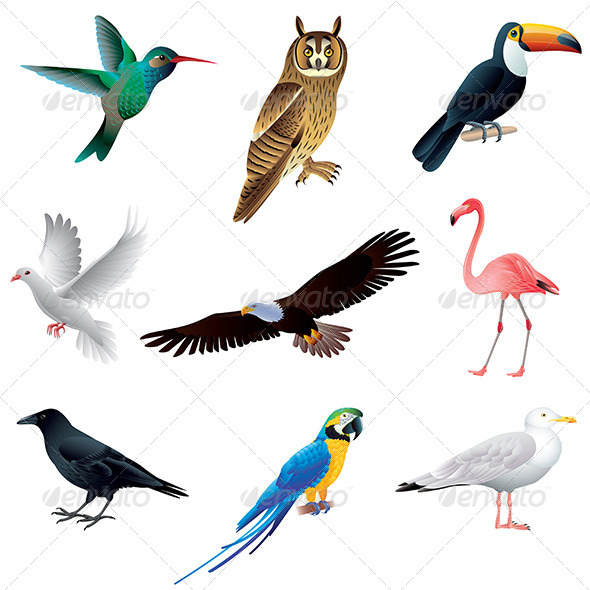 GraphicRiver Birds Isolated on White Vector Set 6351291