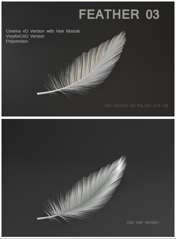 3DOcean Feather 03 6357170