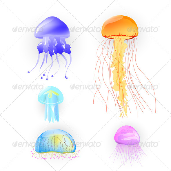 GraphicRiver Illustration of Different Jellyfish 6365773