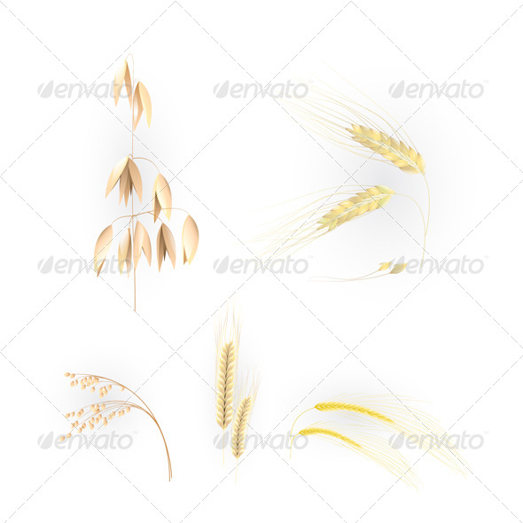 GraphicRiver Illustration with Ears of Grain 6365775