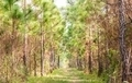 Ecological hike trail in pine forest. - PhotoDune Item for Sale