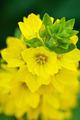 Yellow Flower Macro - PhotoDune Item for Sale