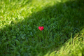 Little heart on the ground - PhotoDune Item for Sale