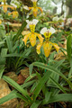 Paphiopedilum flowers in the garden. - PhotoDune Item for Sale