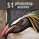 Animals ATNs - Photoshop Actions - GraphicRiver Item for Sale