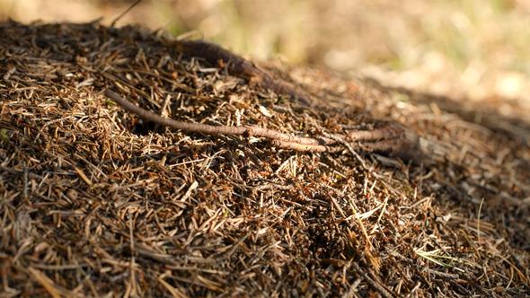 Ant Life 2