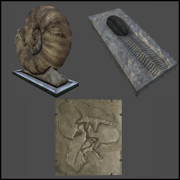 3DOcean Rock Fossils 6383899