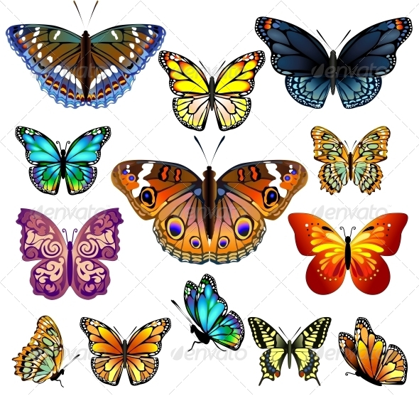 GraphicRiver Set of Colorful Realistic Isolated Butterflies 6401787