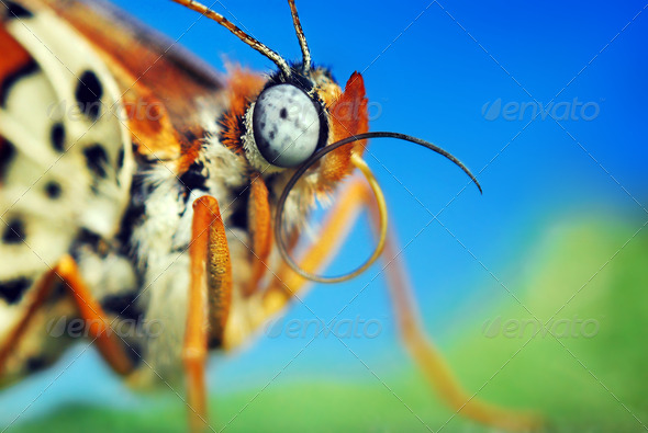 Macro insects