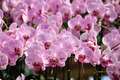 Pink Orchid flowers. - PhotoDune Item for Sale