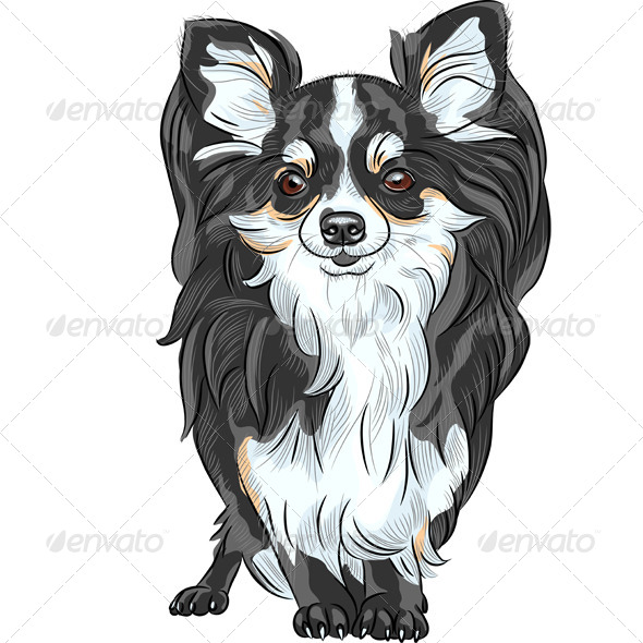 GraphicRiver Vector Sketch Dog Chihuahua Breed Smiling 6405961