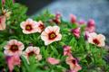 Flower bokeh - PhotoDune Item for Sale
