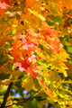 Colorfull autumn leaves - PhotoDune Item for Sale