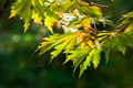 Intensive autumn leaves - PhotoDune Item for Sale