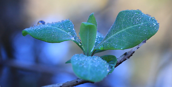 Leaves 08