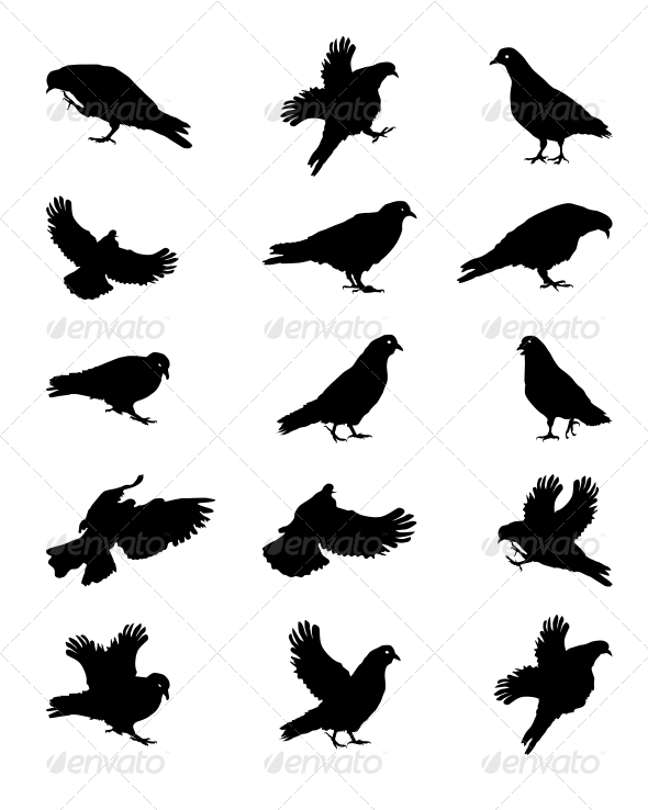 Silhouette of Pigeons Isolated on White Vector Ill