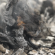 Burnt Paper - VideoHive Item for Sale