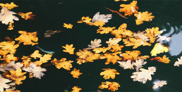 Leaves on the Water 3