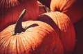 Fall Pumpkin - PhotoDune Item for Sale