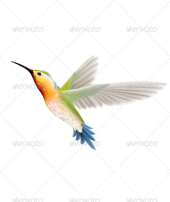 GraphicRiver Hummingbird 6459809