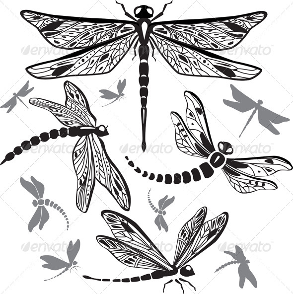 GraphicRiver Set of Decorative Dragonflies 6478331