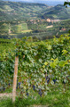 Barolo - Italy 2 - PhotoDune Item for Sale