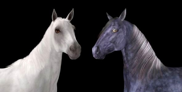 Real Horse White & Black Pack of 2