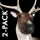 Reindeer (2-Pack) - VideoHive Item for Sale
