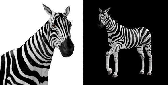 Zebra 2-Pack