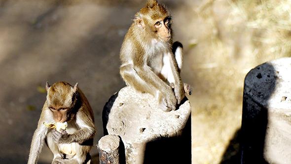 Monkey Eating Potato Chips 5