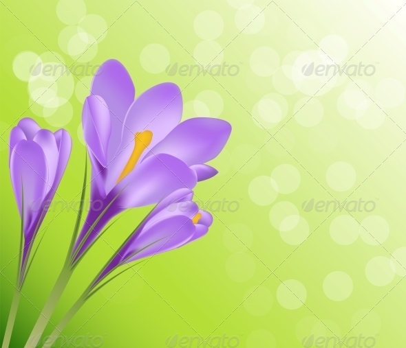 GraphicRiver Vector Illustration Crocus Flower Background 6510008