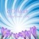 Crocus Flower Background