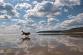 Beach Reflections with Dog. - PhotoDune Item for Sale