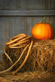 Pumpkin on a bale of hay - PhotoDune Item for Sale