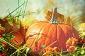 Pumpkin in the grass with vintage color feeling - PhotoDune Item for Sale