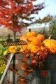 Rake and pumpkins - PhotoDune Item for Sale