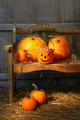Small and big pumpkins on an old bench - PhotoDune Item for Sale