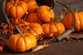 Small pumpkins with wood bucket - PhotoDune Item for Sale