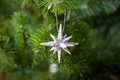 Star at the Tree - PhotoDune Item for Sale