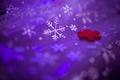Purple xmas texture 1 - PhotoDune Item for Sale