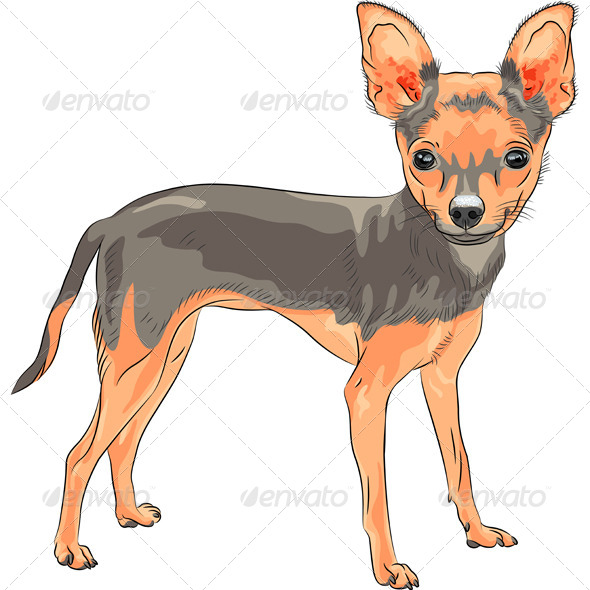 GraphicRiver Chihuahua Breed Smiling 6515703