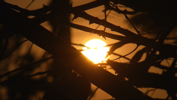 Silhouette Sunset Branch