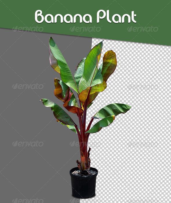 GraphicRiver Banana Plant 6542199