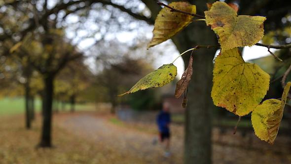 Running in Park 3