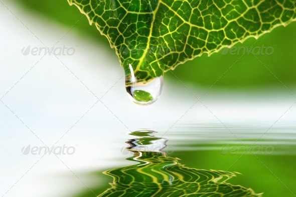 Leaf droplet over water - Stock Photo - Images
