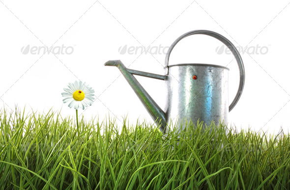 Old watering can in grass with white - Stock Photo - Images