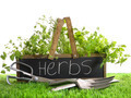 Garden box with assortment of herbs and tools - PhotoDune Item for Sale