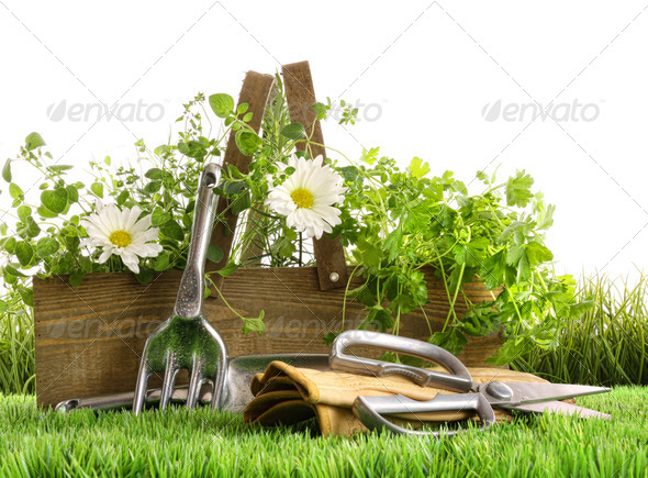 Fresh herbs in wooden box on grass - Stock Photo - Images