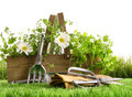 Fresh herbs in wooden box on grass - PhotoDune Item for Sale