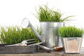 Garden tools and watering can with grass - PhotoDune Item for Sale